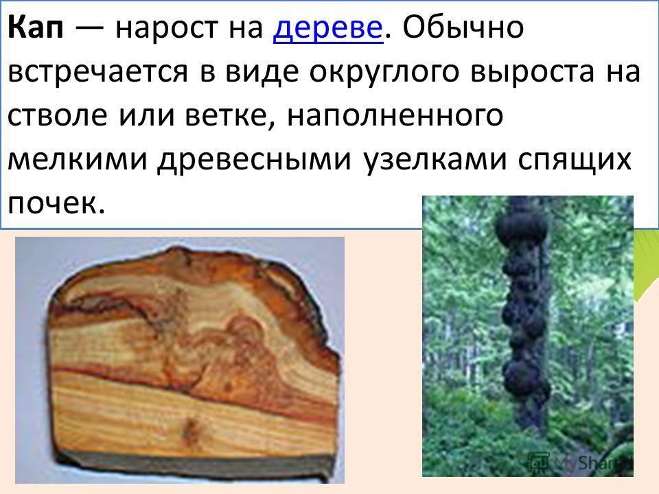 Кап нарост на дереве. Обычно встречается в виде округлого выроста на стволе или ветке, наполненного мелкими древесными узелками спящих почек.дереве