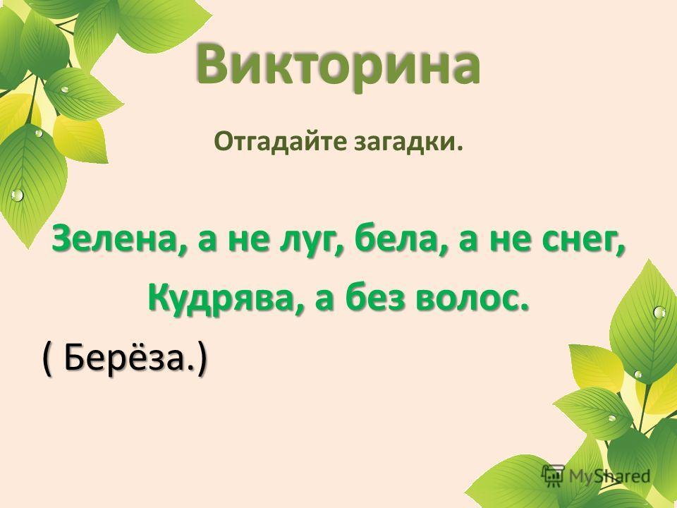 Викторина Отгадайте загадки. Зелена, а не луг, бела, а не снег, Кудрява, а без волос. ( Берёза.)