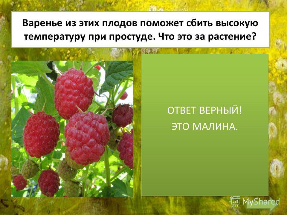 Варенье из этих плодов поможет сбить высокую температуру при простуде. Что это за растение?