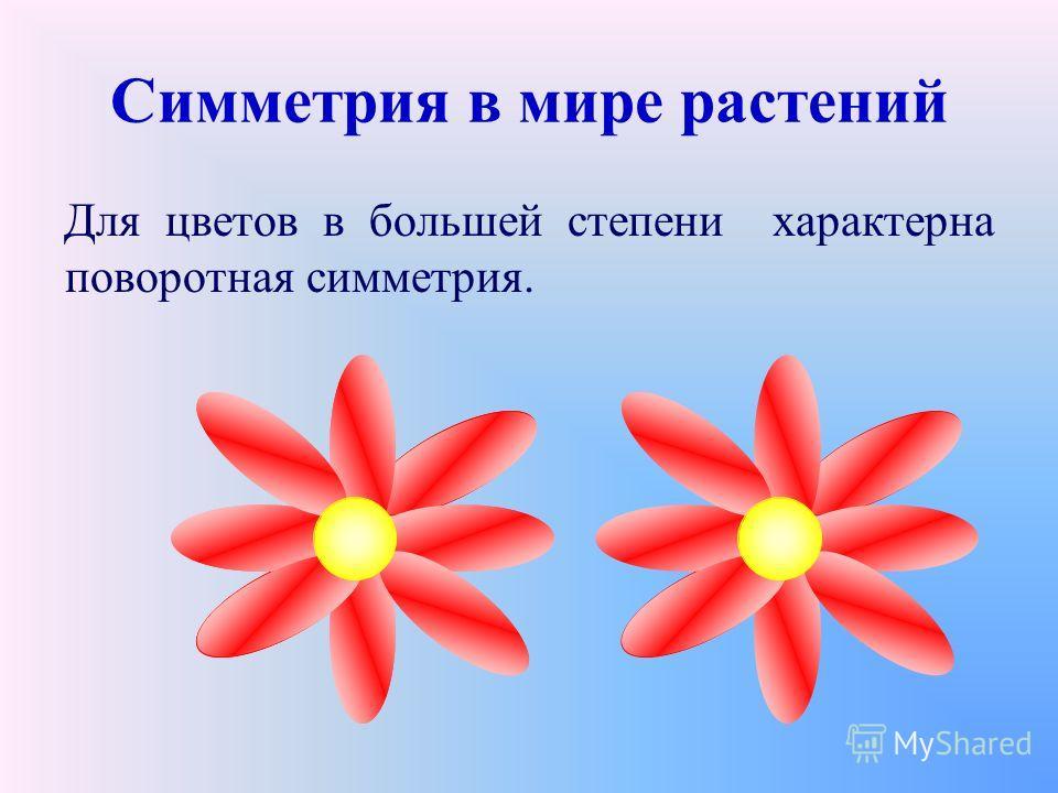 Симметрия в мире растений Для цветов в большей степени характерна поворотная симметрия.