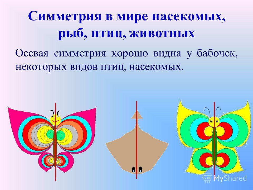 Симметрия в мире насекомых, рыб, птиц, животных Осевая симметрия хорошо видна у бабочек, некоторых видов птиц, насекомых.
