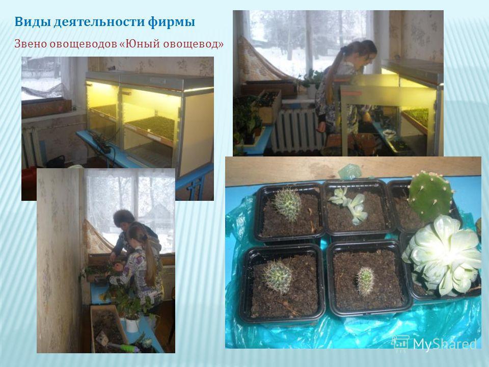 Виды деятельности фирмы Звено овощеводов « Юный овощевод »