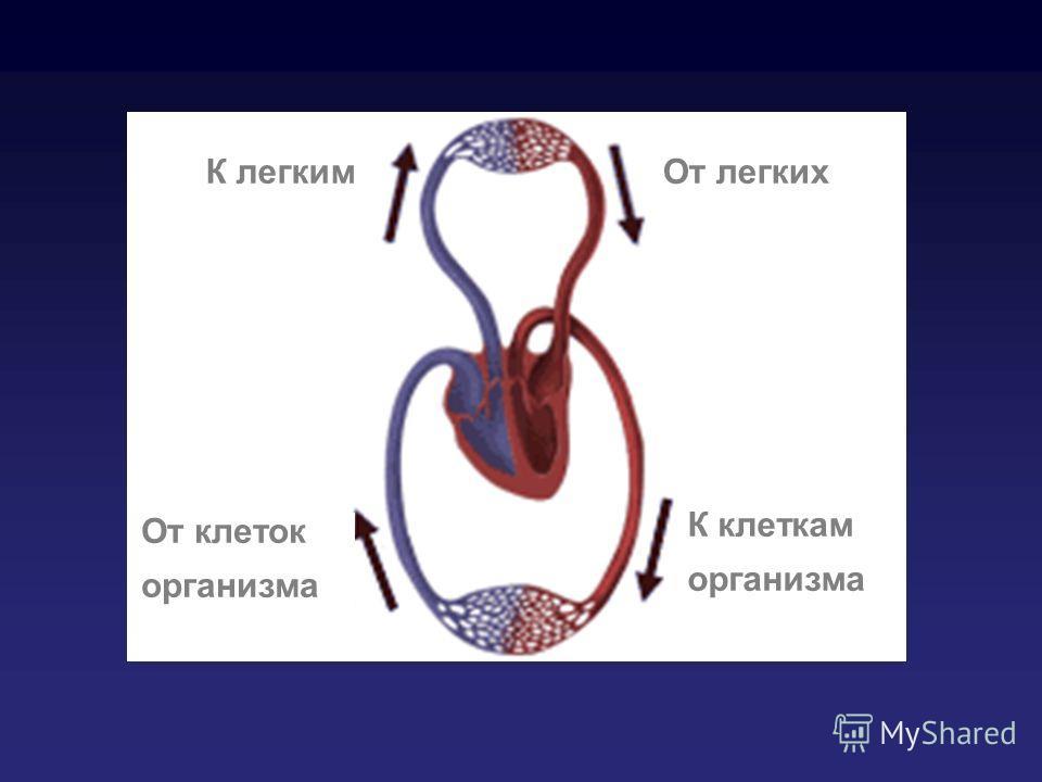 От клеток организма К легкимОт легких К клеткам организма