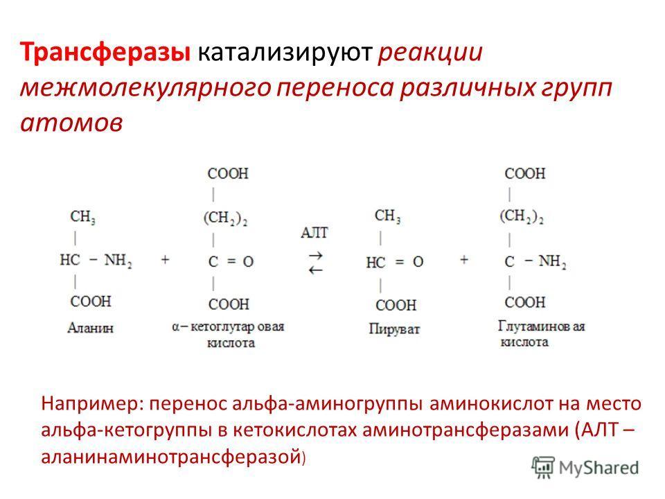 Трансферазы катализируют реакции межмолекулярного переноса различных групп атомов Например: перенос альфа-аминогруппы аминокислот на место альфа-кетогруппы в кетокислотах аминотрансферазами (АЛТ – аланинаминотрансферазой )