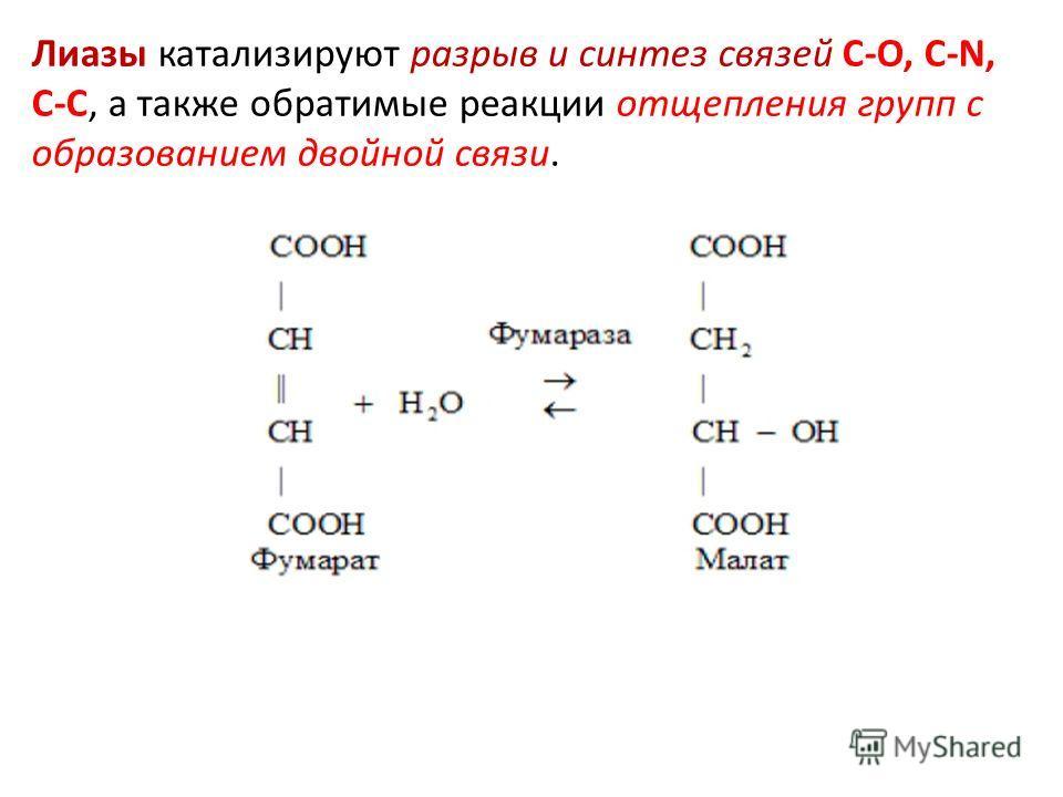 Лиазы катализируют разрыв и синтез связей С-О, С-N, С-C, а также обратимые реакции отщепления групп с образованием двойной связи.