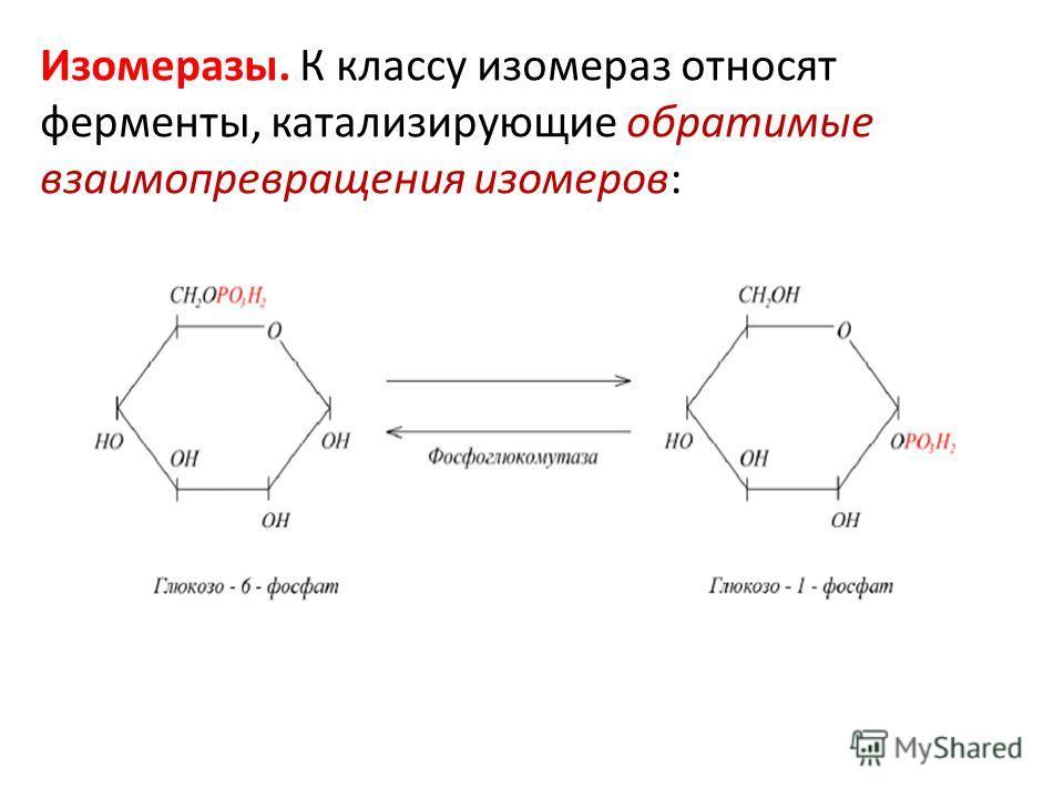Изомеразы. К классу изомераз относят ферменты, катализирующие обратимые взаимопревращения изомеров: