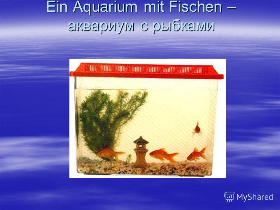 Ein Aquarium mit Fischen – аквариум с рыбками