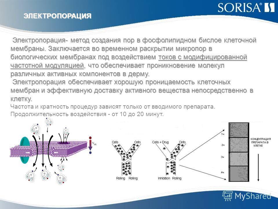 Электропорация- метод создания пор в фосфолипидном бислое клеточной мембраны. Заключается во временном раскрытии микропор в биологических мембранах под воздействием токов с модифицированной частотной модуляцией, что обеспечивает проникновение молекул