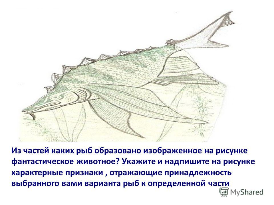 Из частей каких рыб образовано изображенное на рисунке фантастическое животное? Укажите и надпишите на рисунке характерные признаки, отражающие принадлежность выбранного вами варианта рыб к определенной части