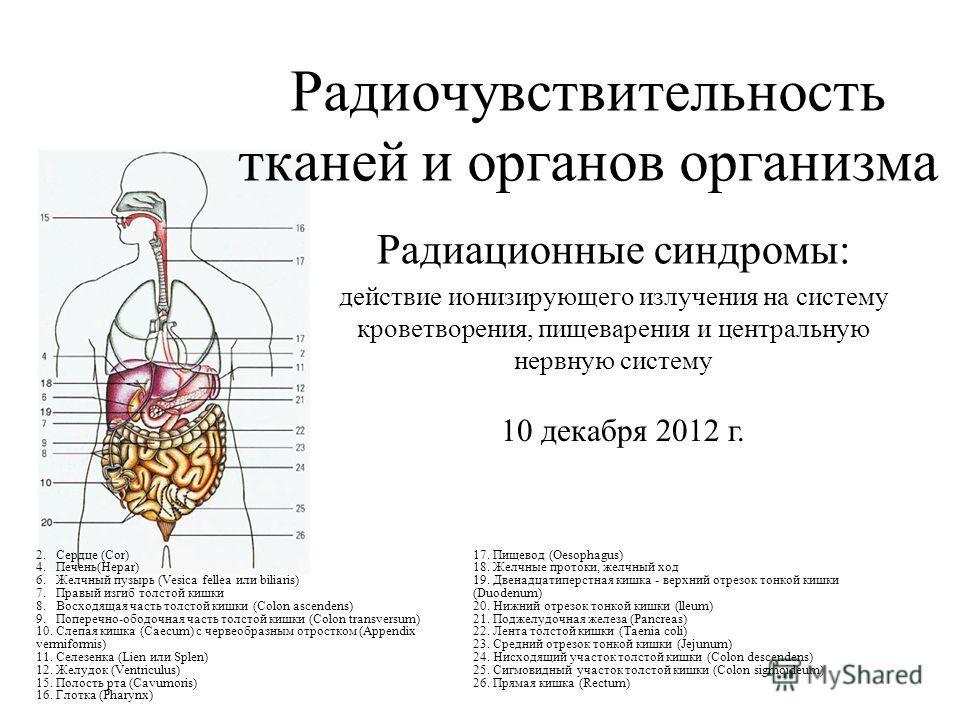 Радиочувствительность тканей и органов организма Радиационные синдромы: действие ионизирующего излучения на систему кроветворения, пищеварения и центральную нервную систему 2. Сердце (Соr) 4. Печень(Нераr) 6. Желчный пузырь (Vesica fellea или biliari
