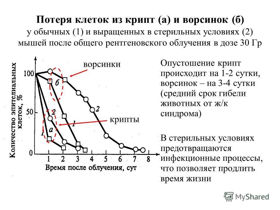 Потеря клеток из крипт (а) и ворсинок (б) у обычных (1) и выращенных в стерильных условиях (2) мышей после общего рентгеновского облучения в дозе 30 Гр Опустошение крипт происходит на 1-2 сутки, ворсинок – на 3-4 сутки (средний срок гибели животных о