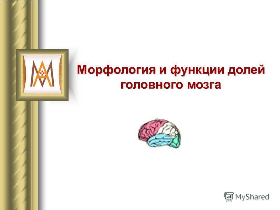 Морфология и функции долей головного мозга
