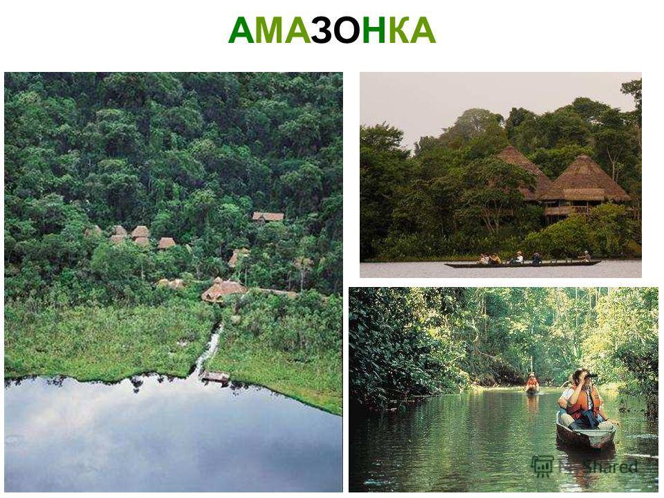 ЖИВОТНЫЕ ЮЖНОЙ АМЕРИКИ Животные южной америки 900igr.net