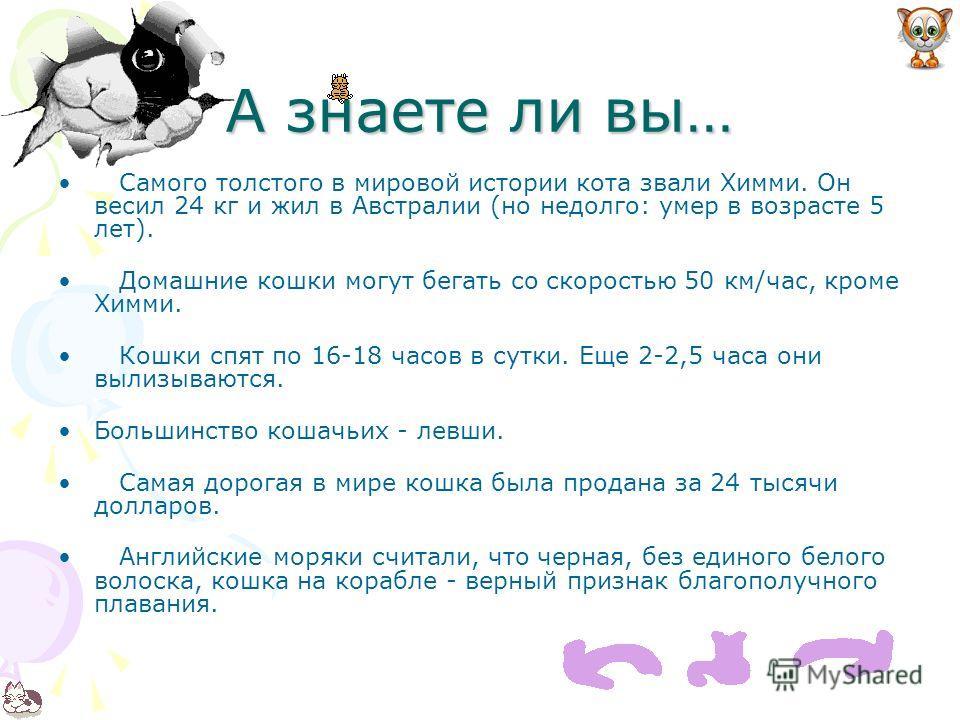 А знаете ли вы… Самого толстого в мировой истории кота звали Химми. Он весил 24 кг и жил в Австралии (но недолго: умер в возрасте 5 лет). Домашние кошки могут бегать со скоростью 50 км/час, кроме Химми. Кошки спят по 16-18 часов в сутки. Еще 2-2,5 ча