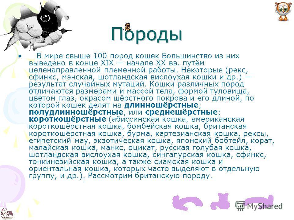 Породы В мире свыше 100 пород кошек Большинство из них выведено в конце XIX начале XX вв. путём целенаправленной племенной работы. Некоторые (рекс, сфинкс, мэнская, шотландская вислоухая кошки и др.) результат случайных мутаций. Кошки различных пород
