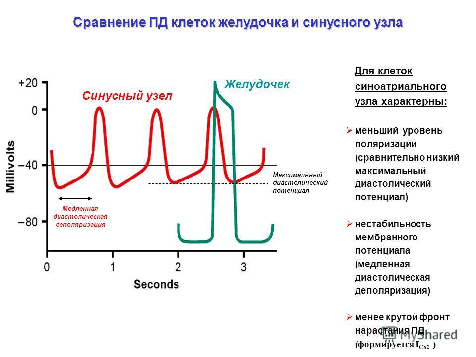 Сравнение ПД клеток желудочка и синусного узла Желудочек Синусный узел Для клеток синоатриального узла характерны: меньший уровень поляризации (сравнительно низкий максимальный диастолический потенциал) нестабильность мембранного потенциала (медленна