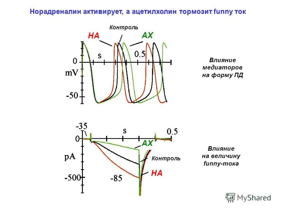 Норадреналин активирует, а ацетилхолин тормозит funny ток Влияние медиаторов на форму ПД Влияние на величину funny-тока Контроль АХ НА Контроль АХ НА