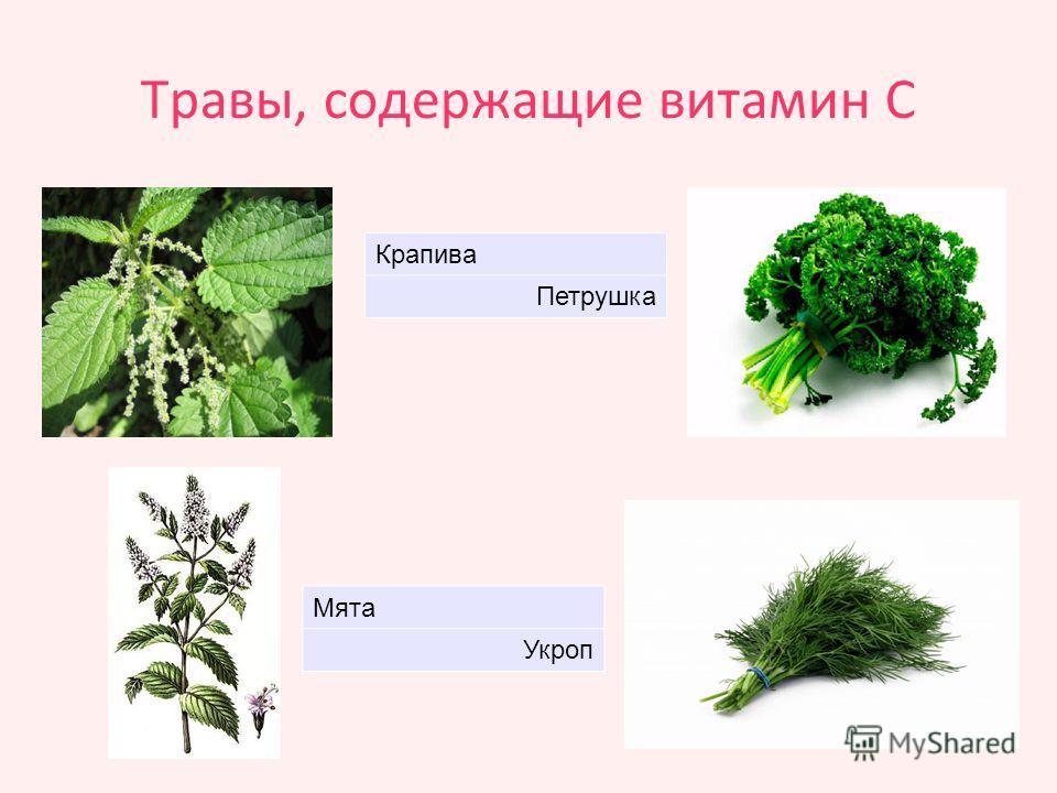 Травы, содержащие витамин С Крапива Петрушка Мята Укроп