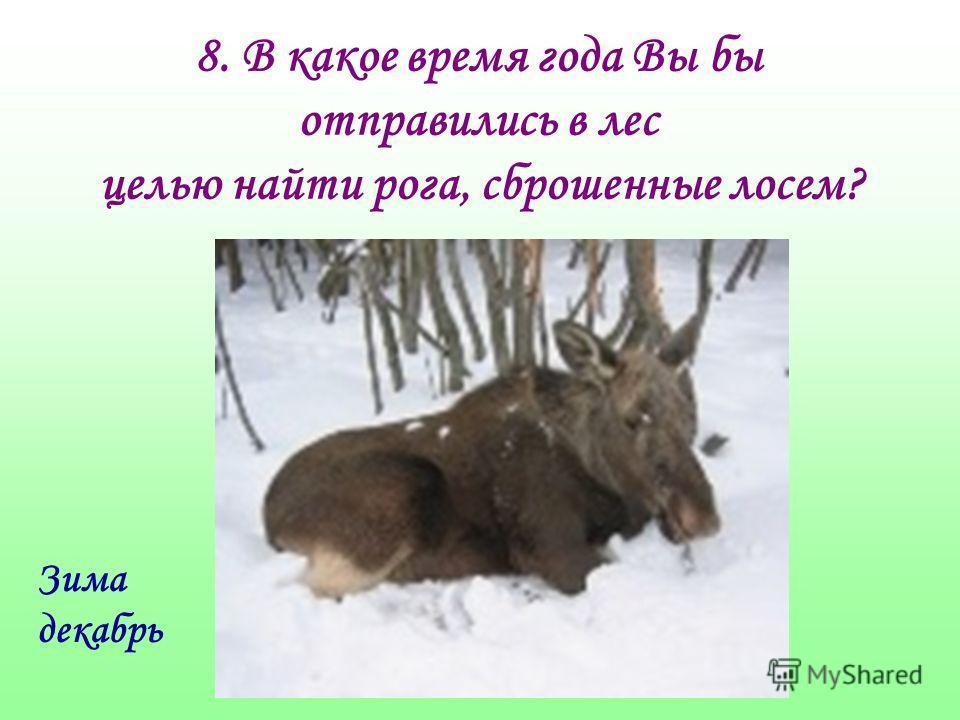 8. В какое время года Вы бы отправились в лес целью найти рога, сброшенные лосем? Зима декабрь