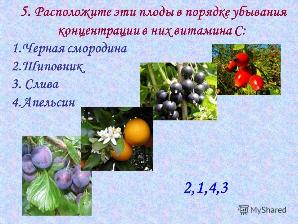 5. Расположите эти плоды в порядке убывания концентрации в них витамина С: 1.Черная смородина 2.Шиповник 3. Слива 4.Апельсин 2,1,4,3