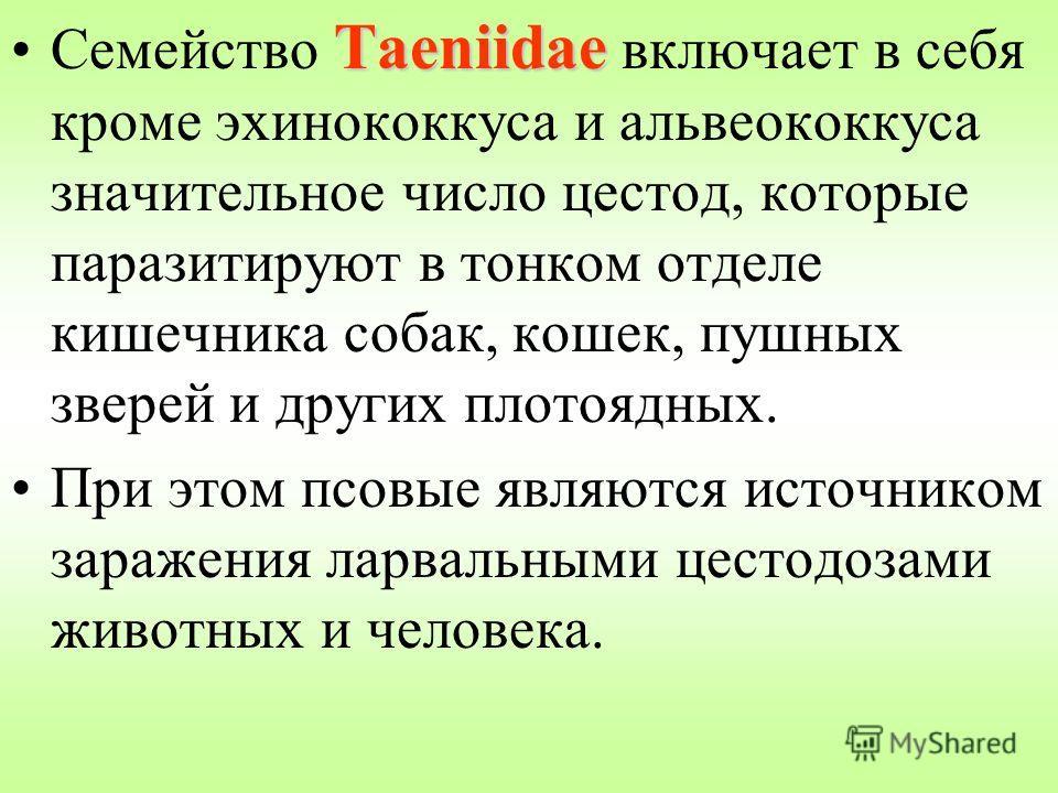 TaeniidaeСемейство Taeniidae включает в себя кроме эхинококкуса и альвеококкуса значительное число цестод, которые паразитируют в тонком отделе кишечника собак, кошек, пушных зверей и других плотоядных. При этом псовые являются источником заражения л