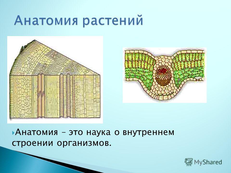 Анатомия – это наука о внутреннем строении организмов.