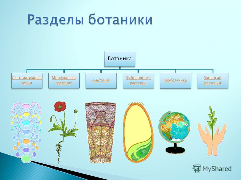 Ботаника Систематикарас тений Морфология растений Анатомия Эмбриология растений Геоботаника Экология растений