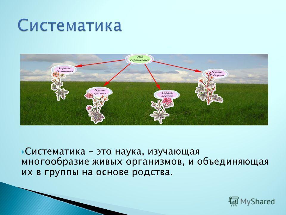 Систематика – это наука, изучающая многообразие живых организмов, и объединяющая их в группы на основе родства.