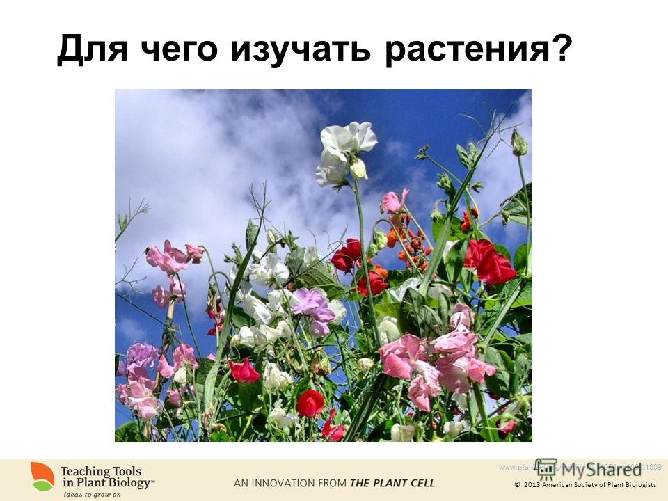 © 2013 American Society of Plant Biologists Для чего изучать растения? www.plantcell.org/cgi/doi/10.1105/tpc.109.tt1009