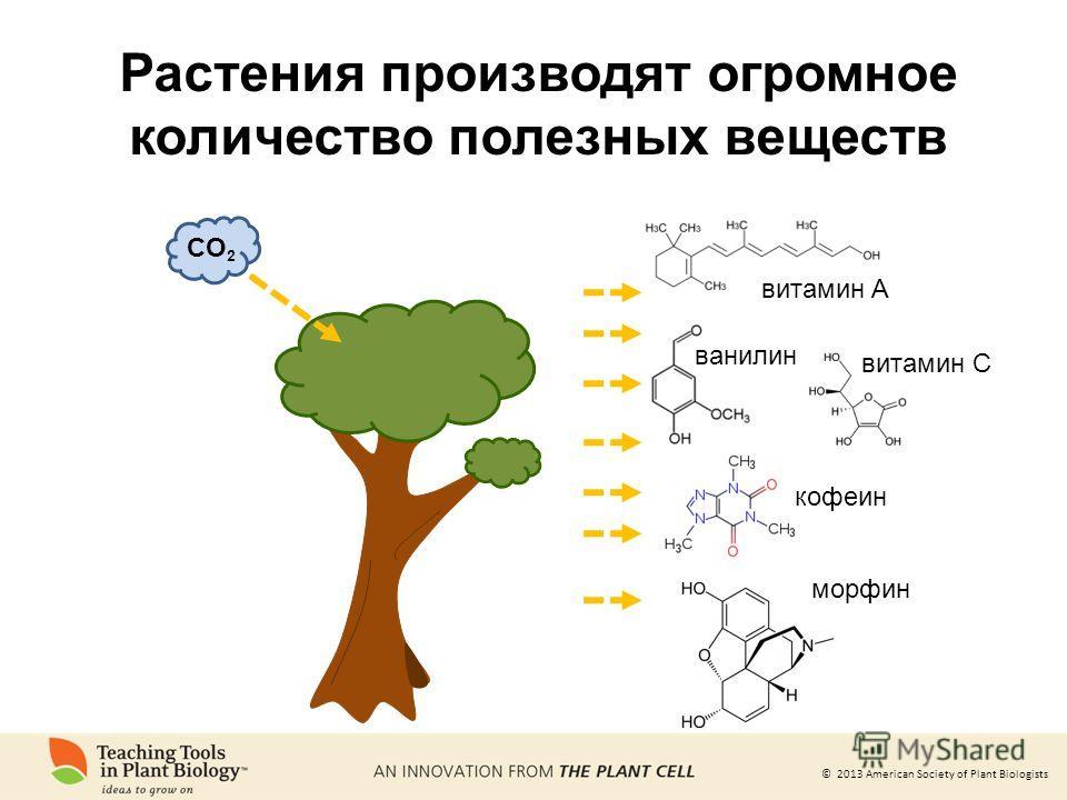 © 2013 American Society of Plant Biologists Растения производят огромное количество полезных веществ витамин A витамин C ванилин кофеин морфин CO 2