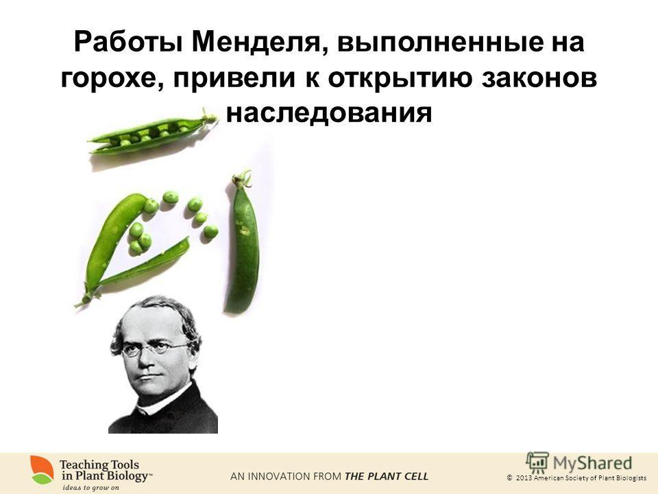 © 2013 American Society of Plant Biologists Работы Менделя, выполненные на горохе, привели к открытию законов наследования