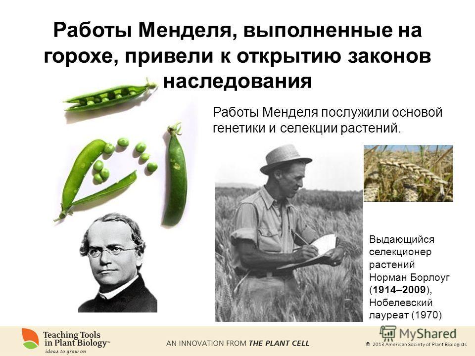 © 2013 American Society of Plant Biologists Работы Менделя послужили основой генетики и селекции растений. Выдающийся селекционер растений Норман Борлоуг (1914–2009), Нобелевский лауреат (1970) Работы Менделя, выполненные на горохе, привели к открыти