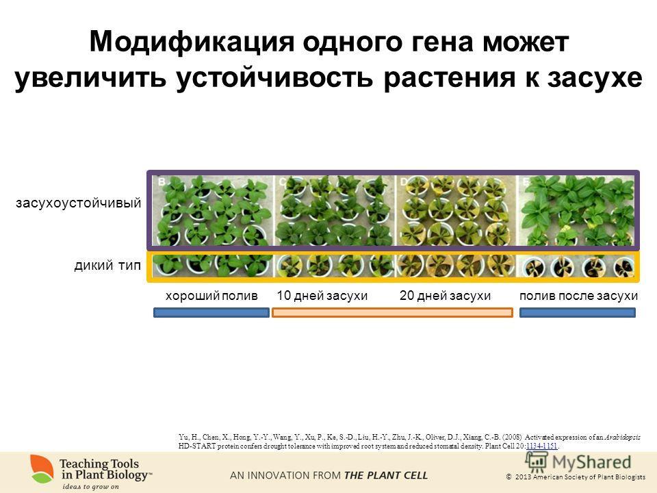 © 2013 American Society of Plant Biologists Модификация одного гена может увеличить устойчивость растения к засухе Yu, H., Chen, X., Hong, Y.-Y., Wang, Y., Xu, P., Ke, S.-D., Liu, H.-Y., Zhu, J.-K., Oliver, D.J., Xiang, C.-B. (2008) Activated express