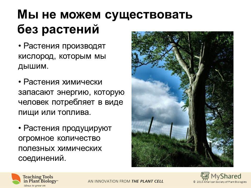 © 2013 American Society of Plant Biologists Мы не можем существовать без растений Растения производят кислород, которым мы дышим. Растения химически запасают энергию, которую человек потребляет в виде пищи или топлива. Растения продуцируют огромное к
