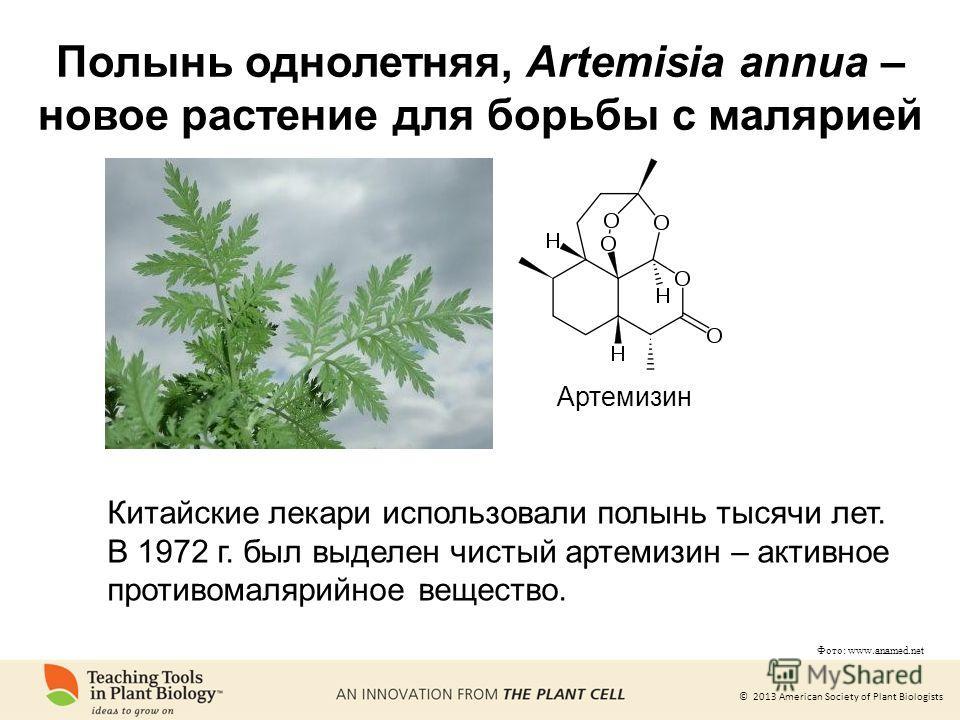 © 2013 American Society of Plant Biologists Фото: www.anamed.net Артемизин Китайские лекари использовали полынь тысячи лет. В 1972 г. был выделен чистый артемизин – активное противомалярийное вещество. Полынь однолетняя, Artemisia annua – новое расте