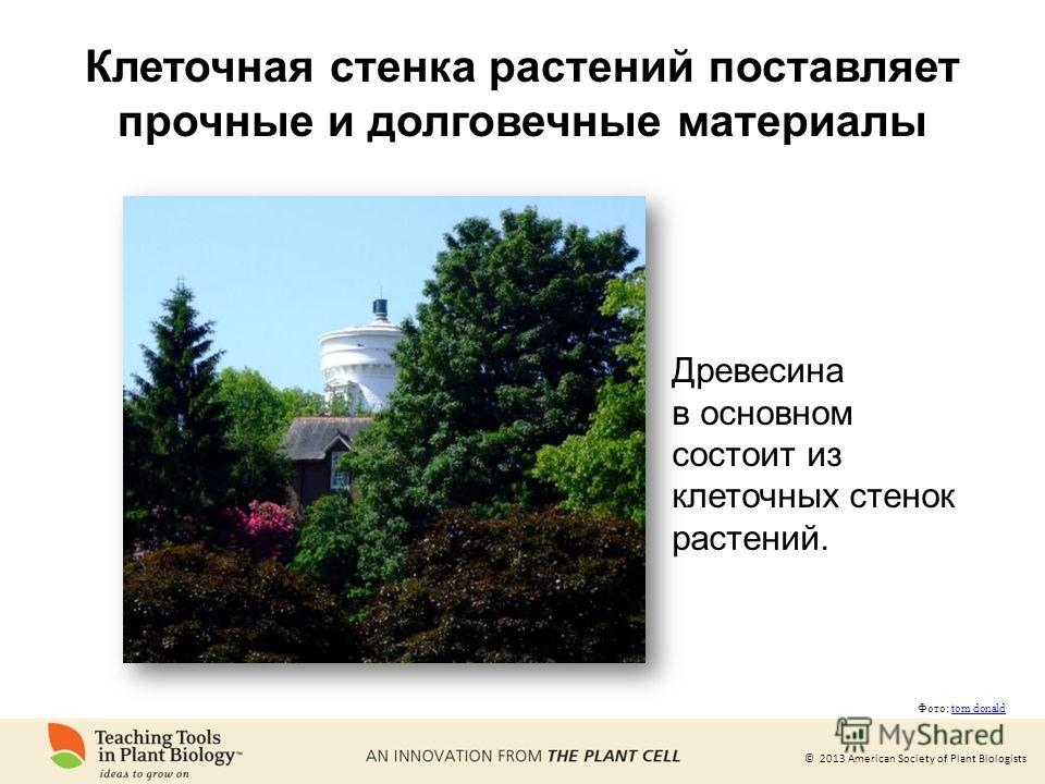 © 2013 American Society of Plant Biologists Клеточная стенка растений поставляет прочные и долговечные материалы Древесина в основном состоит из клеточных стенок растений. Фото: tom donaldtom donald