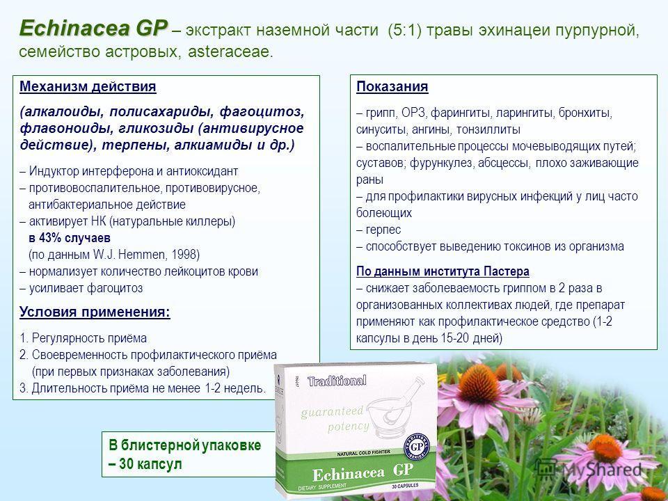 10 Echinacea GP Echinacea GP – экстракт наземной части (5:1) травы эхинацеи пурпурной, семейство астровых, asteraceae. Механизм действия (алкалоиды, полисахариды, фагоцитоз, флавоноиды, гликозиды (антивирусное действие), терпены, алкиамиды и др.) – И