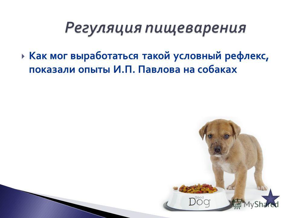 Как мог выработаться такой условный рефлекс, показали опыты И.П. Павлова на собаках