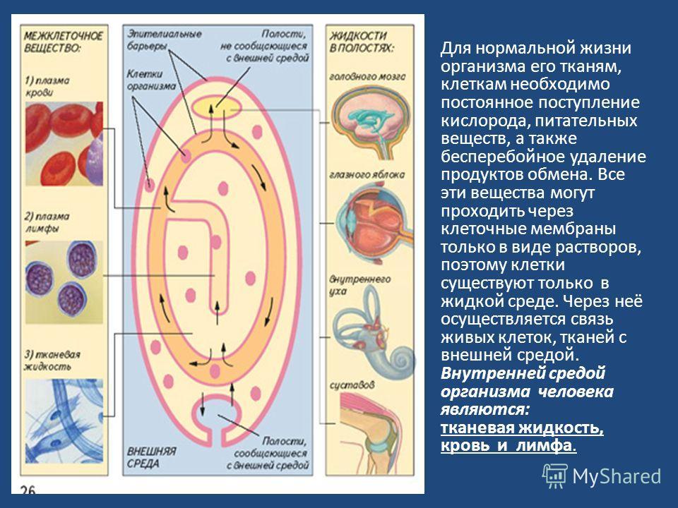 Для нормальной жизни организма его тканям, клеткам необходимо постоянное поступление кислорода, питательных веществ, а также бесперебойное удаление продуктов обмена. Все эти вещества могут проходить через клеточные мембраны только в виде растворов, п