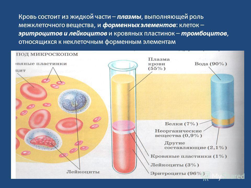 Кровь состоит из жидкой части – плазмы, выполняющей роль межклеточного вещества, и форменных элементов: клеток – эритроцитов и лейкоцитов и кровяных пластинок – тромбоцитов, относящихся к неклеточным форменным элементам