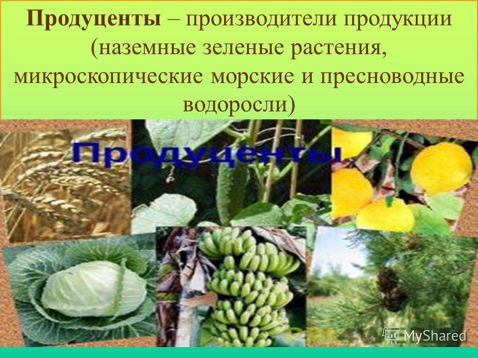 Продуценты – производители продукции (наземные зеленые растения, микроскопические морские и пресноводные водоросли)