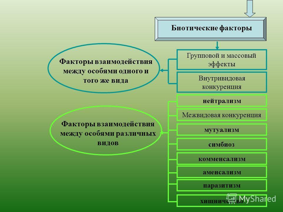 Групповой и массовый эффекты Внутривидовая конкуренция нейтрализм Межвидовая конкуренция мутуализм симбиоз комменсализм аменсализм паразитизм хищничество Факторы взаимодействия между особями одного и того же вида Биотические факторы Факторы взаимодей
