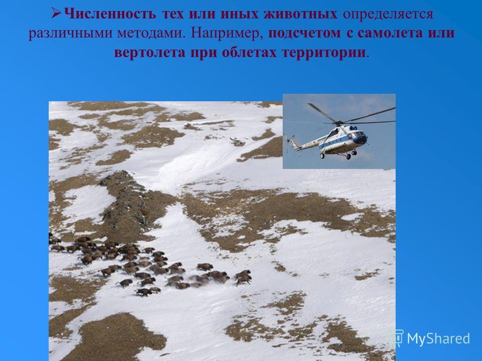 Численность тех или иных животных определяется различными методами. Например, подсчетом с самолета или вертолета при облетах территории.