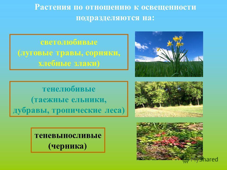 дубравы, тропические леса)