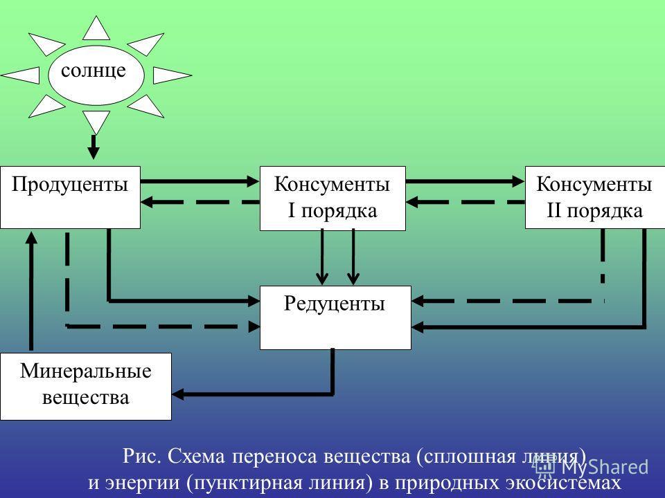 Рис. Схема переноса вещества (сплошная линия) и энергии (пунктирная линия) в природных экосистемах Консументы I порядка Продуценты Редуценты Консументы II порядка Минеральные вещества солнце