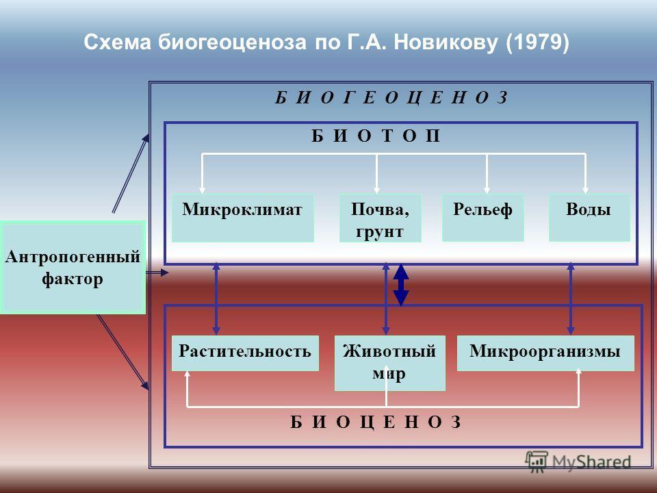 Схема биогеоценоза по Г.А. Новикову (1979) БИОГЕОЦЕНОЗ БИОТОП МикроклиматПочва, грунт РельефВоды РастительностьЖивотный мир Микроорганизмы БИОЦЕНОЗ Антропогенный фактор