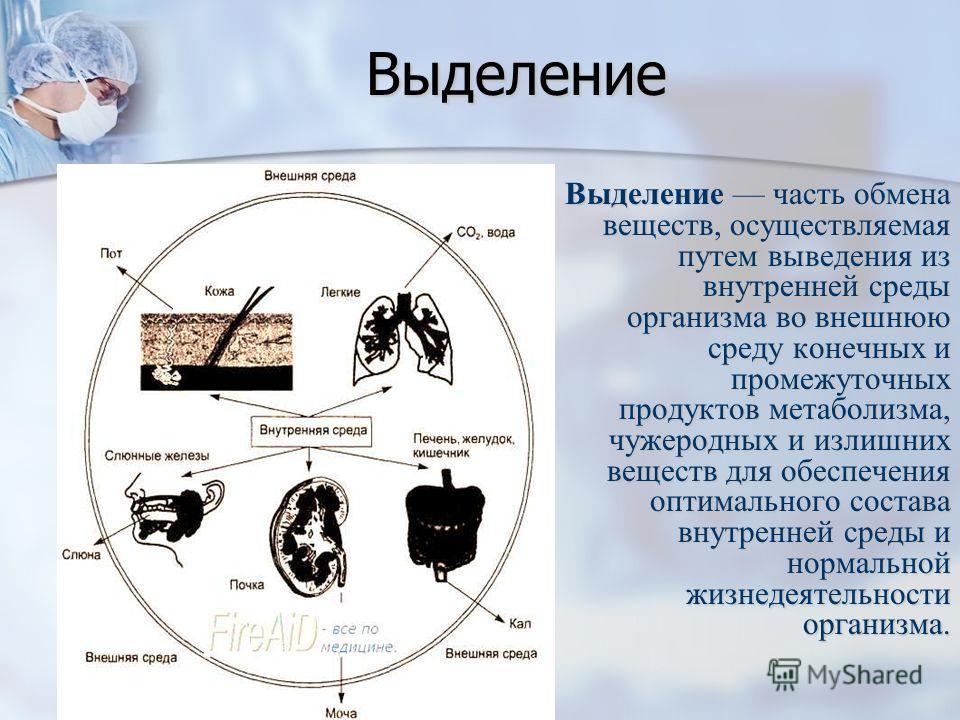 Выделение Выделение часть обмена веществ, осуществляемая путем выведения из внутренней среды организма во внешнюю среду конечных и промежуточных продуктов метаболизма, чужеродных и излишних веществ для обеспечения оптимального состава внутренней сред
