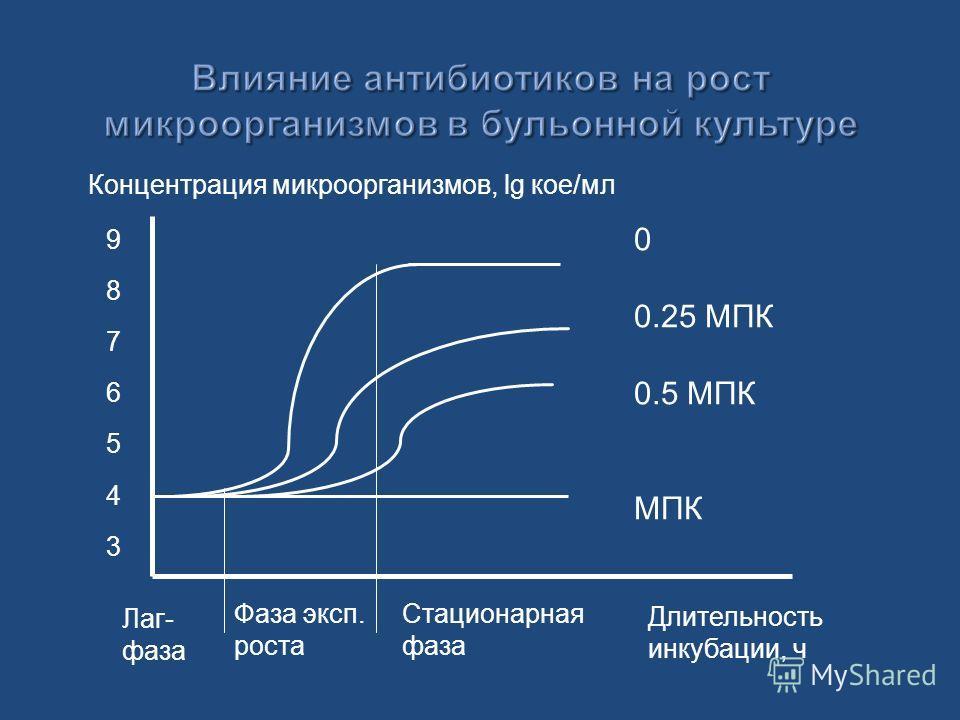 Концентрация микроорганизмов, lg кое/мл Длительность инкубации, ч 98765439876543 0 0.25 МПК 0.5 МПК МПК Лаг- фаза Фаза эксп. роста Стационарная фаза