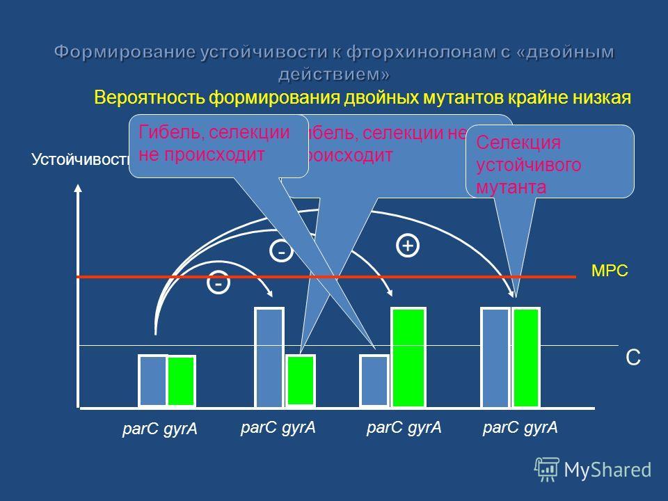 Устойчивость parC gyrA C - - + Гибель, селекции не происходит Селекция устойчивого мутанта Вероятность формирования двойных мутантов крайне низкая MPC
