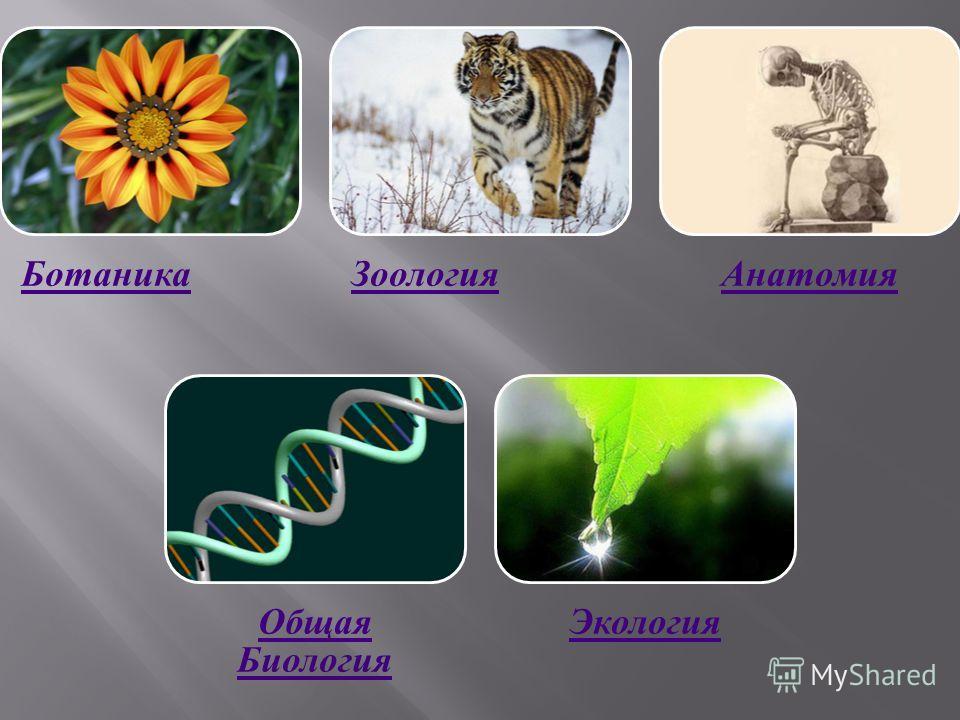 БотаникаЗоологияАнатомия Общая Биология Экология